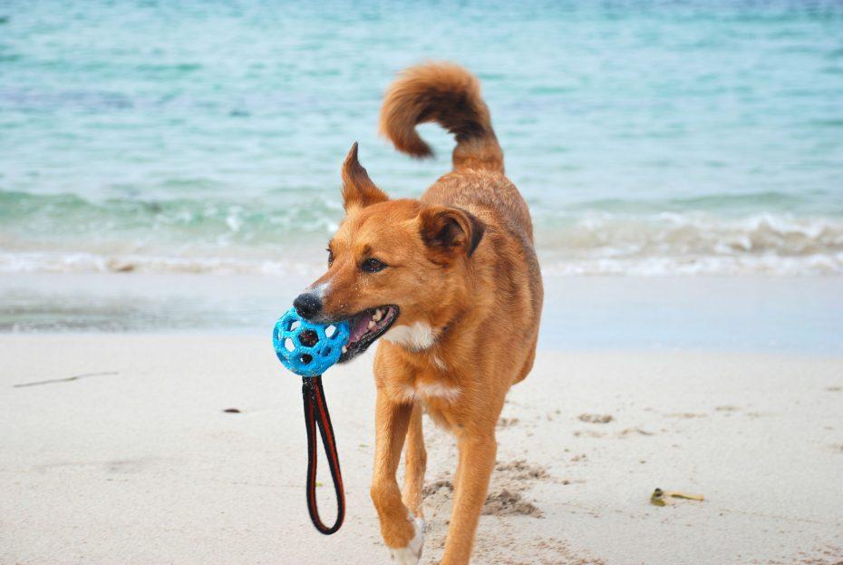 Dog on perfect beach!