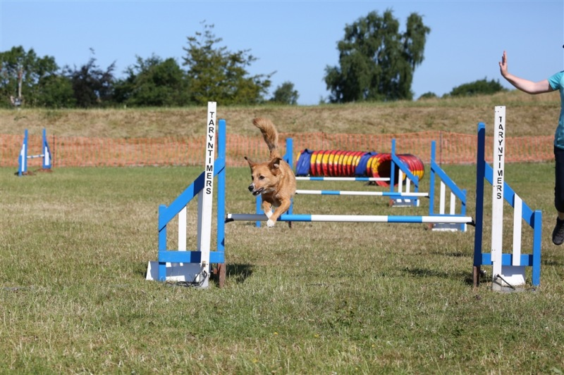 Lune Valley veterans dog agility