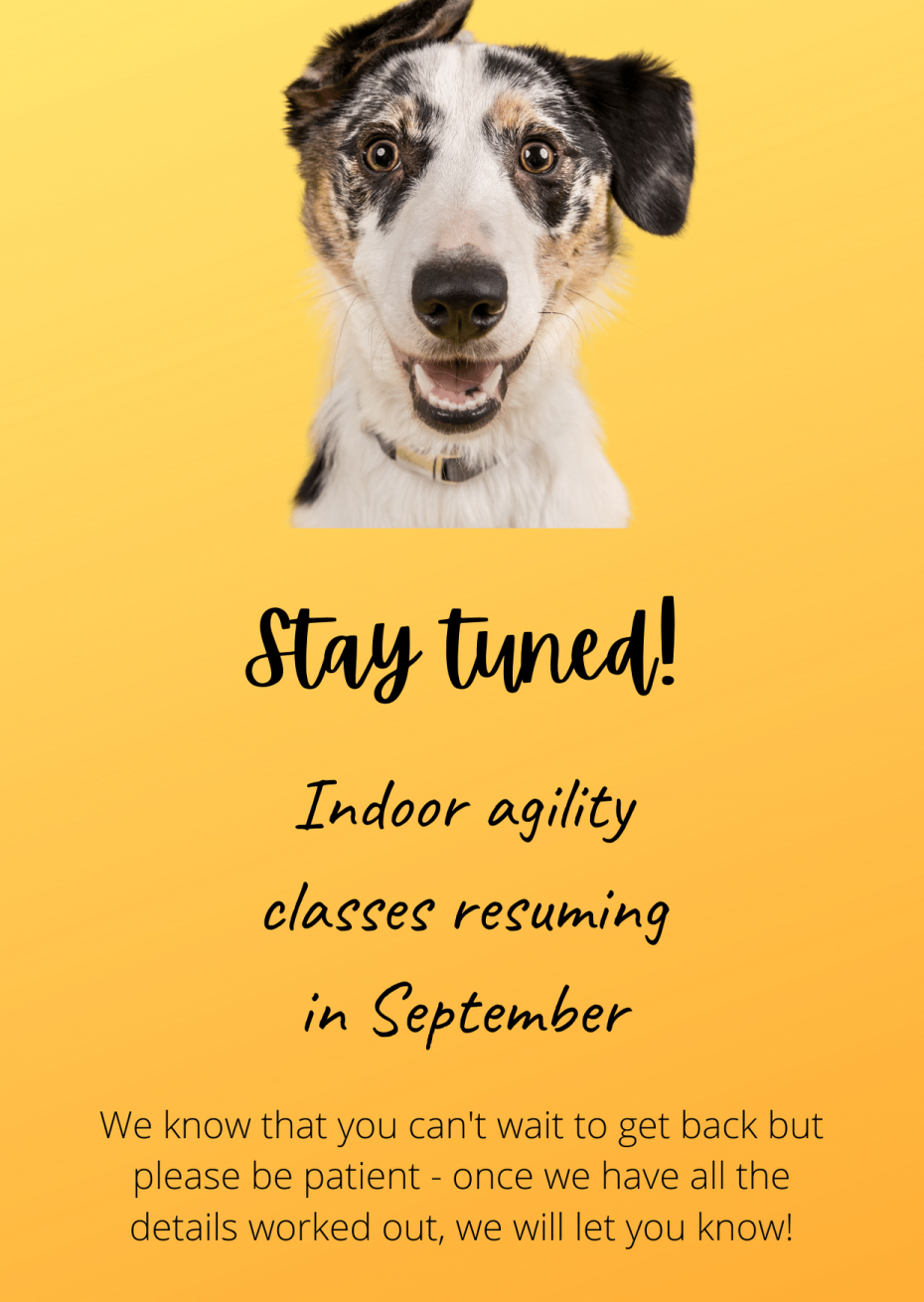 Agility training to restart in September
